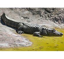 crocodile at the zoo Photographic Print