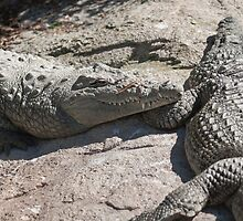 crocodile at the zoo by spetenfia