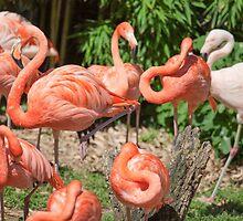 pink flamingo by spetenfia