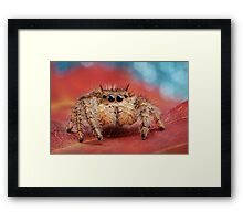 Arachnid Red Bokeh Blue Framed Print