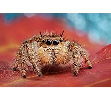 Arachnid Red Bokeh Blue Photographic Print
