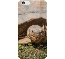 tortoise at zoo iPhone Case/Skin