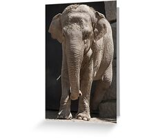 elephant at the zoo Greeting Card