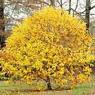 A Yellow Tree by RickDavis