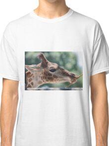 giraffe at the zoo Classic T-Shirt