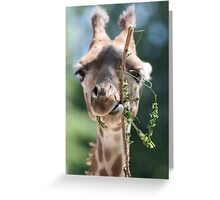 giraffe at the zoo Greeting Card