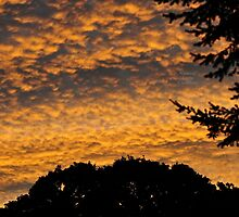 """"""" Cirrocumulus Morning """" by Richard Couchman"""