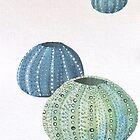 Sea urchin study by LisaLeQuelenec