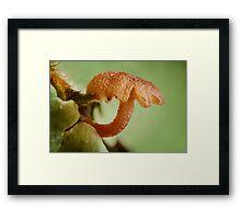 Miniature Mushroom Framed Print