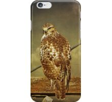 Juvenile Red Tail Hawk iPhone Case/Skin