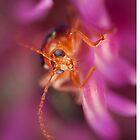 Beetle Peeking From Pink Flower by Dan Dexter