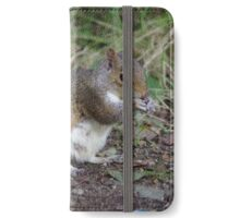 Squirrel at Tehidy Woods in Cornwall.   iPhone Wallet/Case/Skin