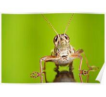 Smiling Grasshopper Poster