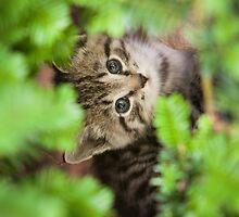 Lonely Kitten by Dan Dexter