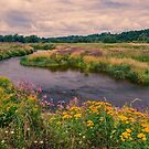 Wildflowers Along The Grand by jules572