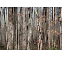 Curtain of Trees  Photographic Print
