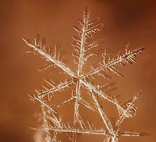 Snowflake on Mars 2 by Dan Dexter