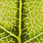Leaf Macro Photograph by Dan Dexter