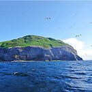 Ailsa Craig West Coast. Firth of Clyde, Scotland. by youmeus
