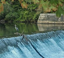 Heron Looking towards the Future by Barry Doherty