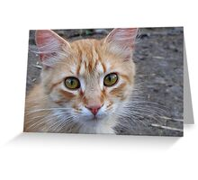 I know what you think about Greeting Card