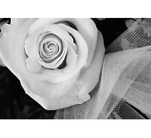 Wedding Rose Photographic Print