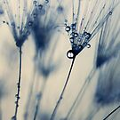 droplets of moody blues by Ingz