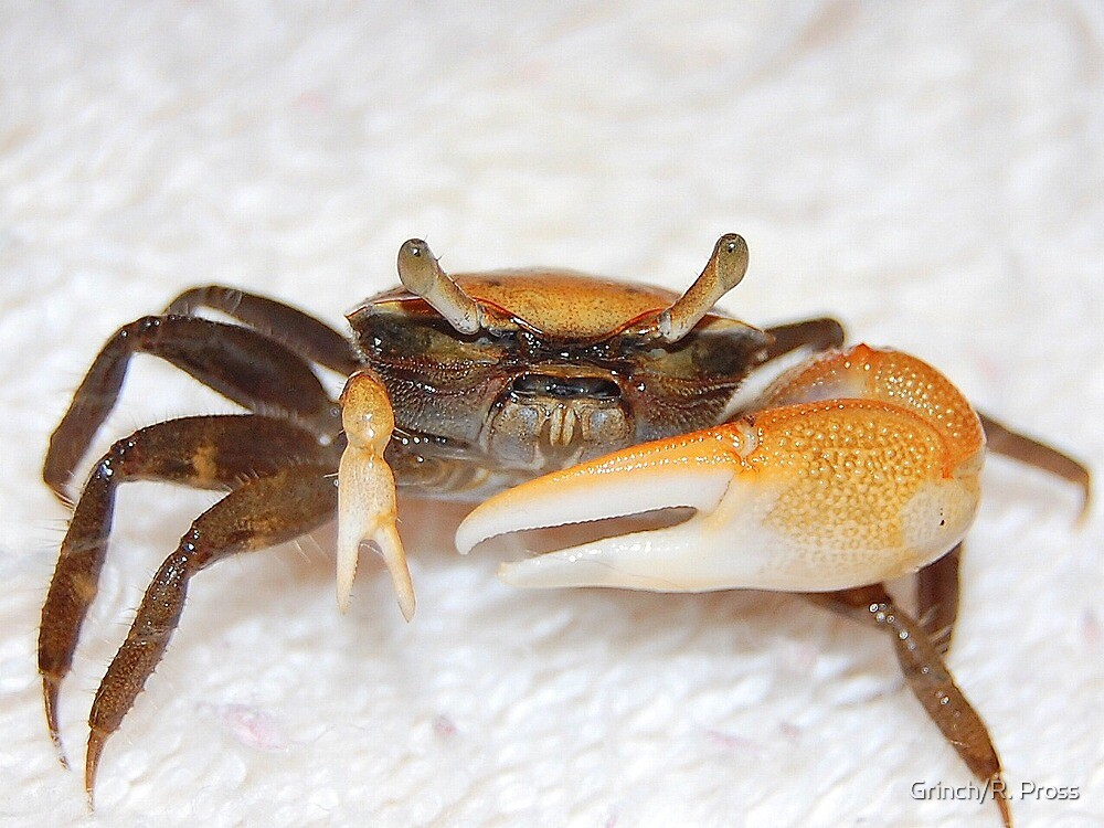 Mr. Crabs by Grinch/R. Pross