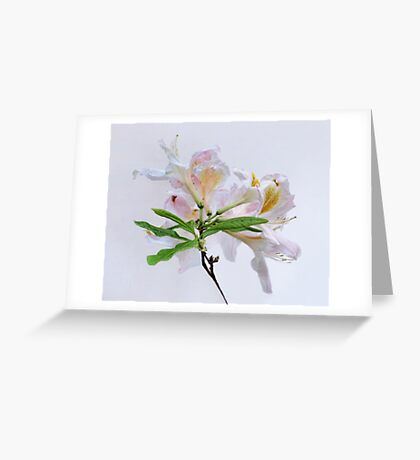 White Exbury Azalea Bloom Greeting Card