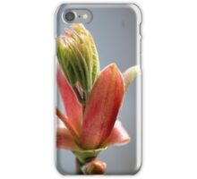 Budding Maple - Memories of Spring iPhone Case/Skin