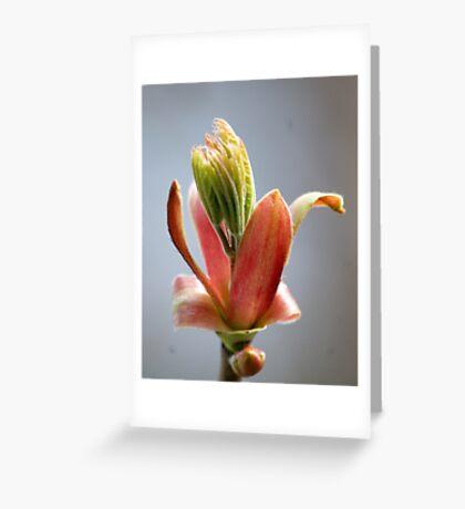 Budding Maple - Memories of Spring Greeting Card