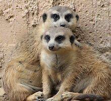 Meerkat Mahem by Robin Raible