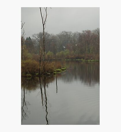 New England Swamp Photographic Print