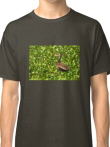 Black-bellied Whistling-Duck Classic T-Shirt
