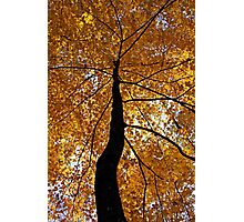 Fall Canopy Photographic Print