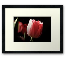 Tribute to PINK Framed Print