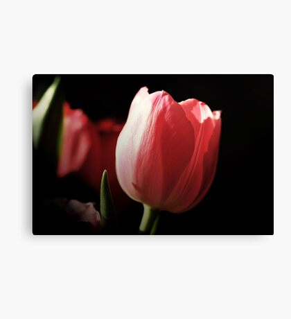 Tribute to PINK Canvas Print