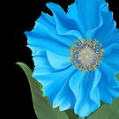 Blue Himalayan Poppy by Laura Bell