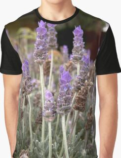 Lavender Field Graphic T-Shirt