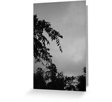 Sky and Tree Greeting Card