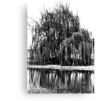 Black and White Weeping Willow Canvas Print