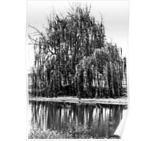 Black and White Weeping Willow Poster