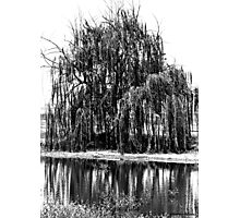Black and White Weeping Willow Photographic Print