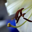 experimental closeup of a white lily by bubblehex08