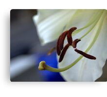 experimental closeup of a white lily Canvas Print