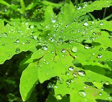 Fern and Raindrops by Sarah Niebank