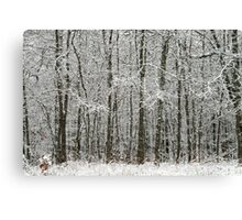 Thick Winter Woods Canvas Print