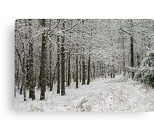 A Hike In The Winter Woods Canvas Print