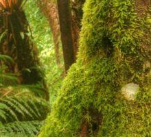 Tassie Rainforest Sticker