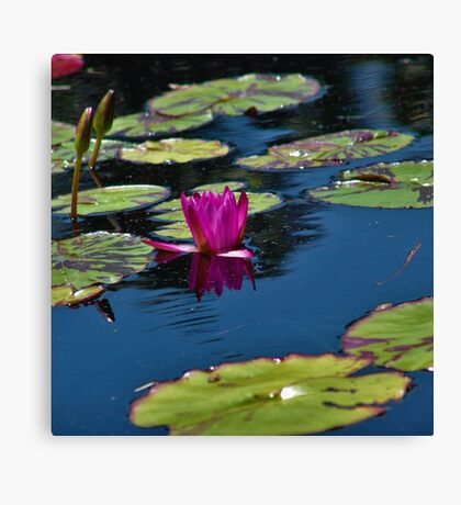 Water Flower Canvas Print